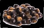 gurana-seed-extract