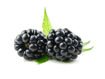 jeunesse-monavie-Blackberry